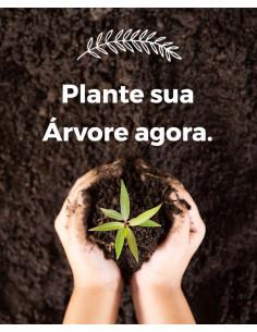 Plante a sua árvore agora,...